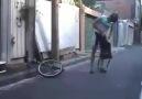 minik bisiklet
