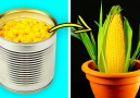 5-Minute Crafts - Brilliant hacks for your garden that...