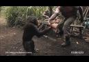 Monkey   AK47 = ????