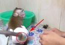 Monkey Baby Nita - Monkey Baby Too Bathed With Daddy Smart Monkey