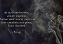 Mooji - Quote of the Day