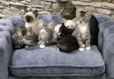 Most amazing photo shoot ever!!! (By Tinykittens)