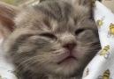Most precious little kitty