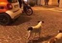 Motorla köpeklerden nasıl kaçılmaz D D