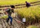 Muhteşem hasat yöntemi