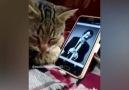 Müslüm baba dinleyip efkarlanan kedi
