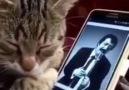 Müslüm Baba Dinleyip Efkarlanan Sevimli Kedi ) Belgeselce