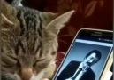 Müslüm Baba hayranı Anadolu kedisi