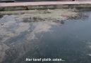 Mustafa Tuzkaya - İstinye Sahili&son hali... Deniz...
