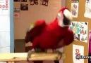 Müziğe ayak uyduran papağanlar..:-)