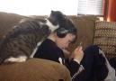 Müzik dinleme beni sev! Listelist Hayvansever