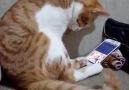 Müzik Dinleyerek Efkarlanan Kedi.. D