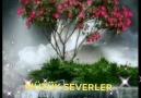 Müzik Severler - AMİNGÜNAYDIN