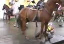 Nada puede interponerse entre el amor de dos caballos