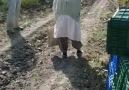 Nar Toplayan İşçilere Kızan Egeli Teyze :)