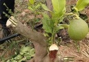 Natural World - Plant grafting Facebook