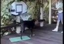 NBA'in son transferi *