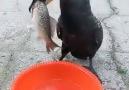 Nereye gitti Balıklar O O