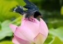 New Cinema 2019 - Pure Lotus Flower! Facebook