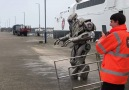 New recruit Titan the Robot at Isle of Man Harbours