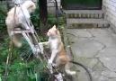 Ninja Kedi İzleyin :))