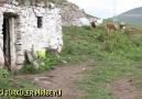 NİYE FELEK - Eski Türküler Piribeyli