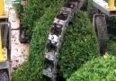 No need of Gardener !