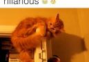 No wonder cats need 9 lives