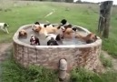 Now thats what I call a pool party!