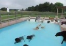 Now THIS is a pool Party