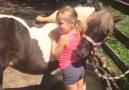 NTD Television - I love horses. Facebook