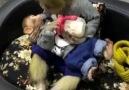 NTD Television - Monkey bottlefeeds her baby milk