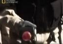 Nükleer bomba - (2)