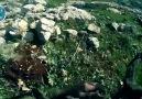 Nusret Cephesi  Mücahidi Kendi Ölüm  Anını  Kaydetti