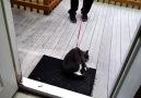Oddball Cats