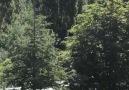ODTÜ&KYK yurdu için ağaçların kesilmesine başlandı