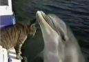 O gato e o Golfinho