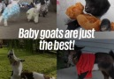 Oh my goat! I NEED one...