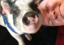 Oink if you love this video!