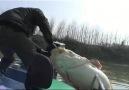 Oltayla 100 kiloluk balığı işte böyle tuttu!