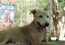 Ölüme Terkedilmiş KöpeğeŞefkat Eli... - Nihat Hatipoğlu sevenler