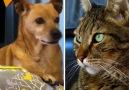 Ölü taklidi yaptı kedi ve köpeğin tepkisi bakın nasıl