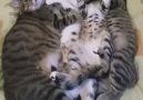 One big happy Kitty Family