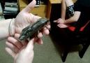 One F*cking Huge Moth