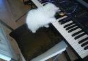 Orgla tanışma ve ilk bestemiz.... :)  :)16 Temmuz 2013