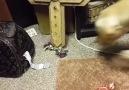 Ortaya Karışık - Komik Hayvanlar Facebook