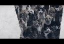 Osmanlıda Kedi ve Köpekler Sokakta Aç Bırakılıyor muydu-