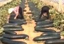 Outdoor Kingdom - Wao! Such a Wonderful Farms!!! Facebook