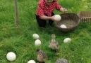 Outdoor Kingdom - Wao! Such a Wonderful Ostrich Farm!!! Facebook