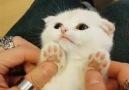 Patiliyo - Kalp eriten yavru kediler